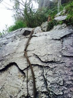 MP.huaynapicchu.rope1